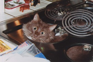 Fridgie FryPan checking out the stove.