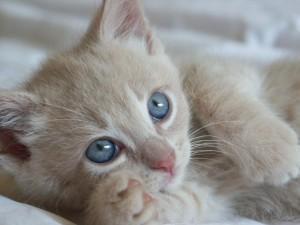 karens-kitties-0211
