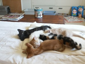 Kittens waiting for a home