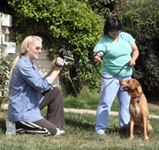 Karen Lee Stevens Videoing a Shelter Dog
