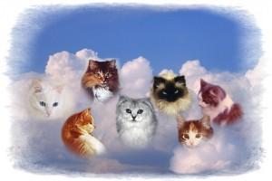 Heavenly Cats