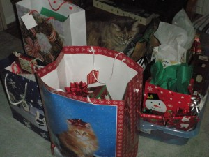 Lily searching for her gift--catnip, maybe?
