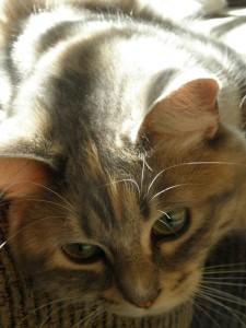 catsflowersadam-008