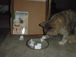 laurenshowercats-066