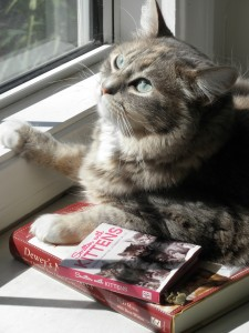 Maybe Cats Are Smarter, Too