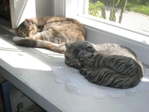 CatsBirdofParadise 045