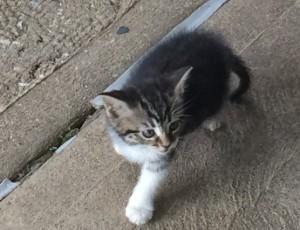 Kitten 2ullSizeRender