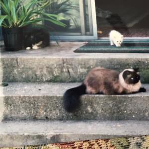 3 catsIMG_1977