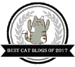 Best Cat Blogs 2107